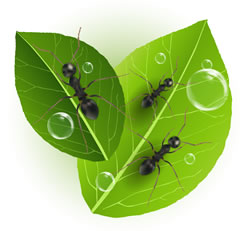 ants-on-leaves