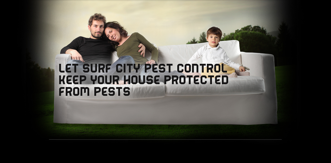 Pest Control Orange County Termite Solutions Rodent
