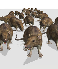 When Surf City Termite Pest Control Services Our Client S Rodent Infestations We Roach It In A Way That Will Ensure The Quickest Possible Results
